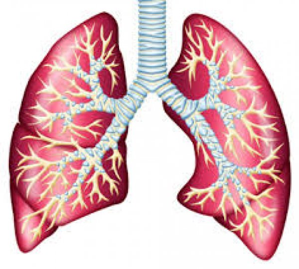 Specjalistyczna Praktyka Lekarska dr n. med. Ryszard Olesiejuk Choroby Płuc,Choroby wewnętrzne
